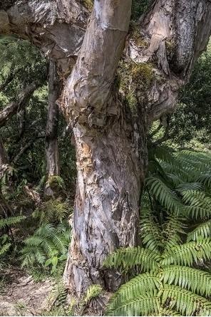 有害植物アロハプログラム ログイン